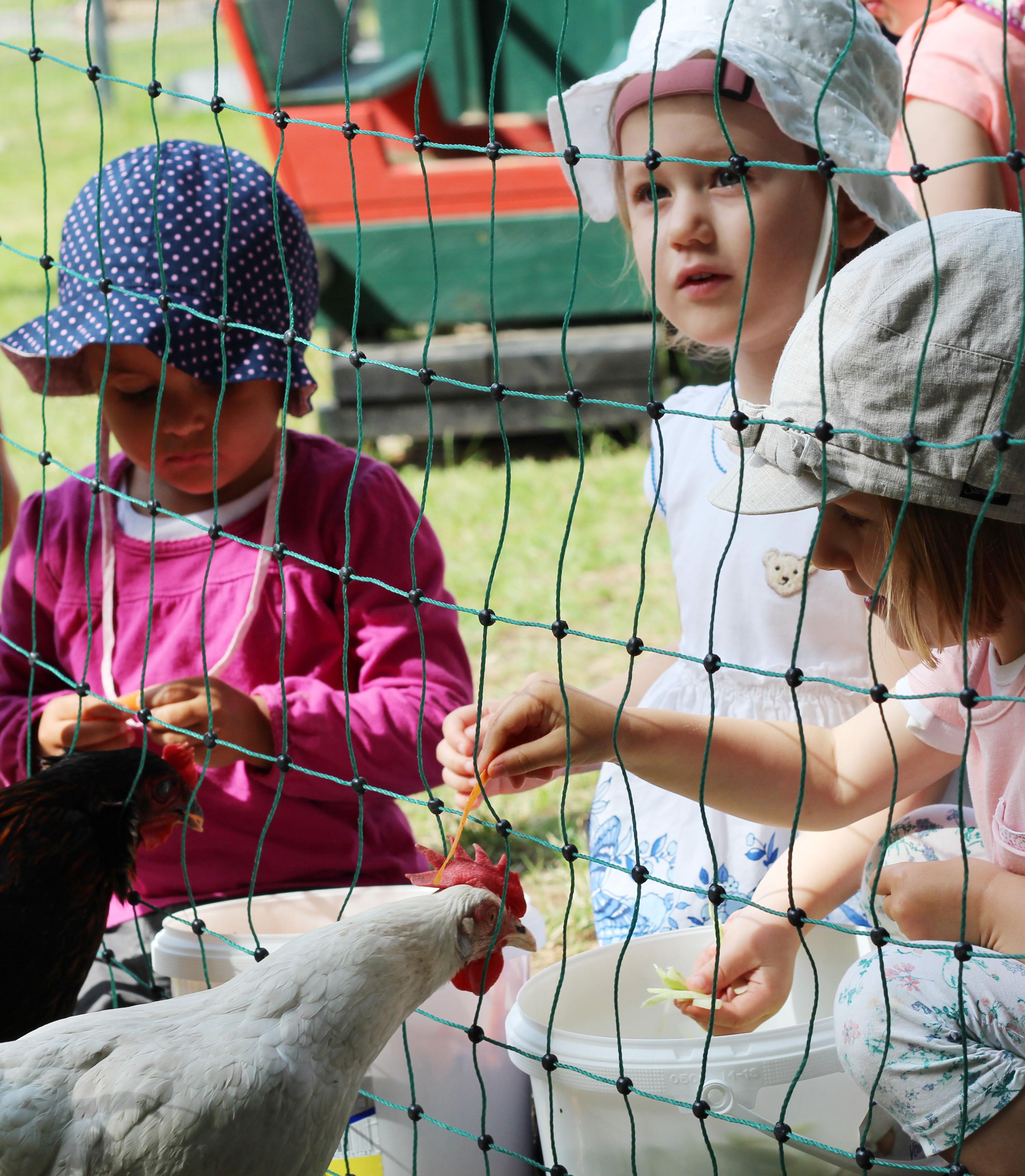 Miete ein Huhn - Für Kindergärten
