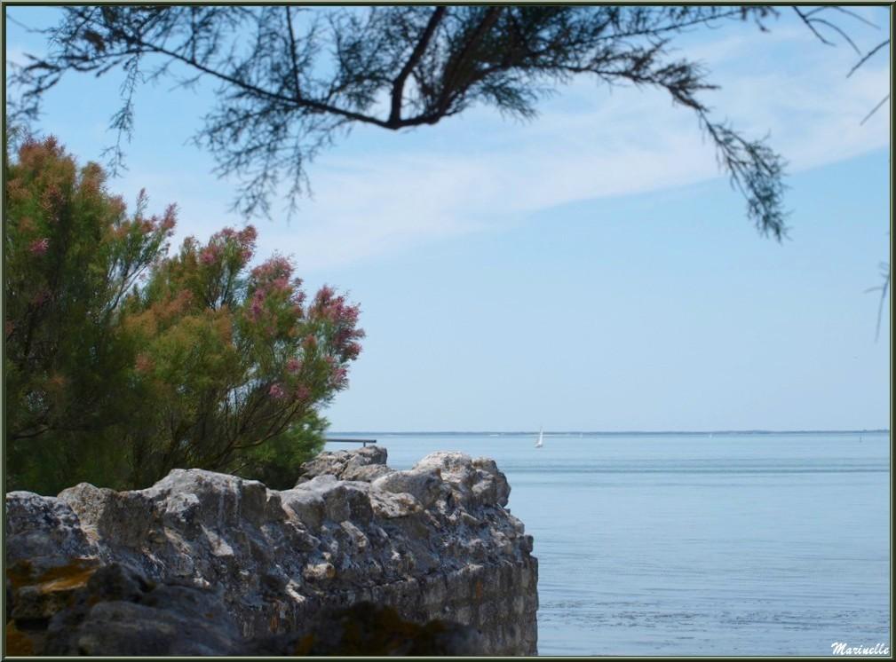 Vue sur La Gironde depuis les fortifications de Talmont -sur-Gironde (Charente-Maritime)