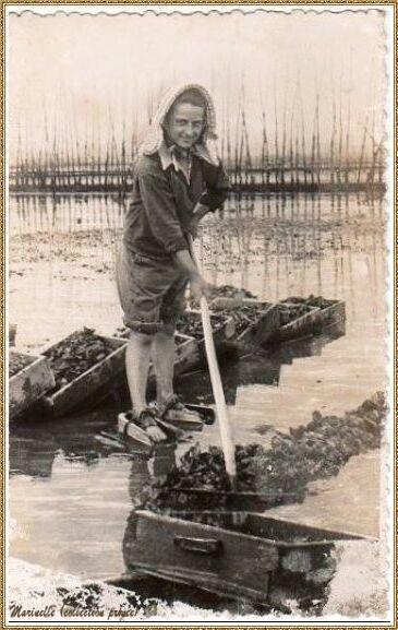 Gujan-Mestras autrefois : Parqueuse au ramassage des huîtres sur un parc, Bassin d'Arcachon (carte postale, collection privée)