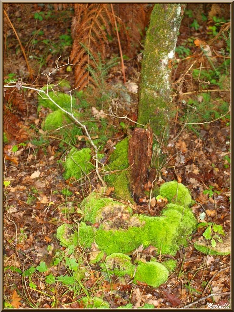 Méli mélo forestier automnal : fougères, mousse, feuilles de chêne et tronc d'arbre, forêt sur le Bassin d'Arcachon (33)