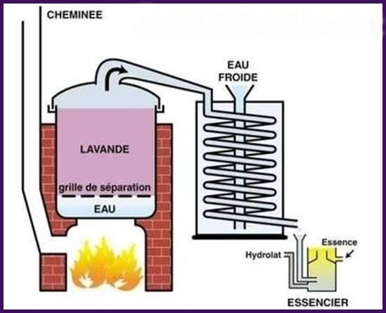 Extraction à feu nu fixe