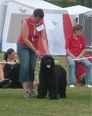 Concetta auf dem Goldcup 2006