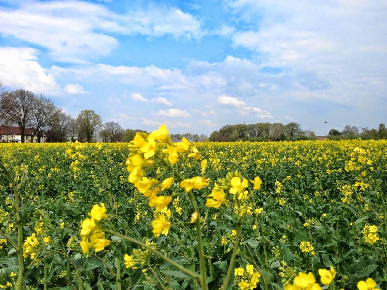 ~ Bild: Frühlingsfeld ~