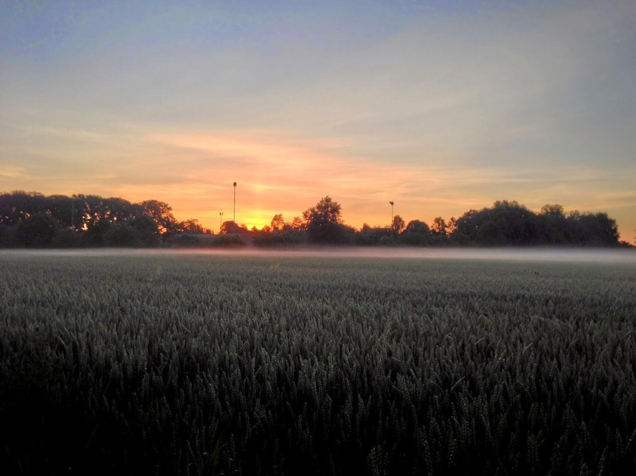 ~ Bild: Frostige Sonne ~