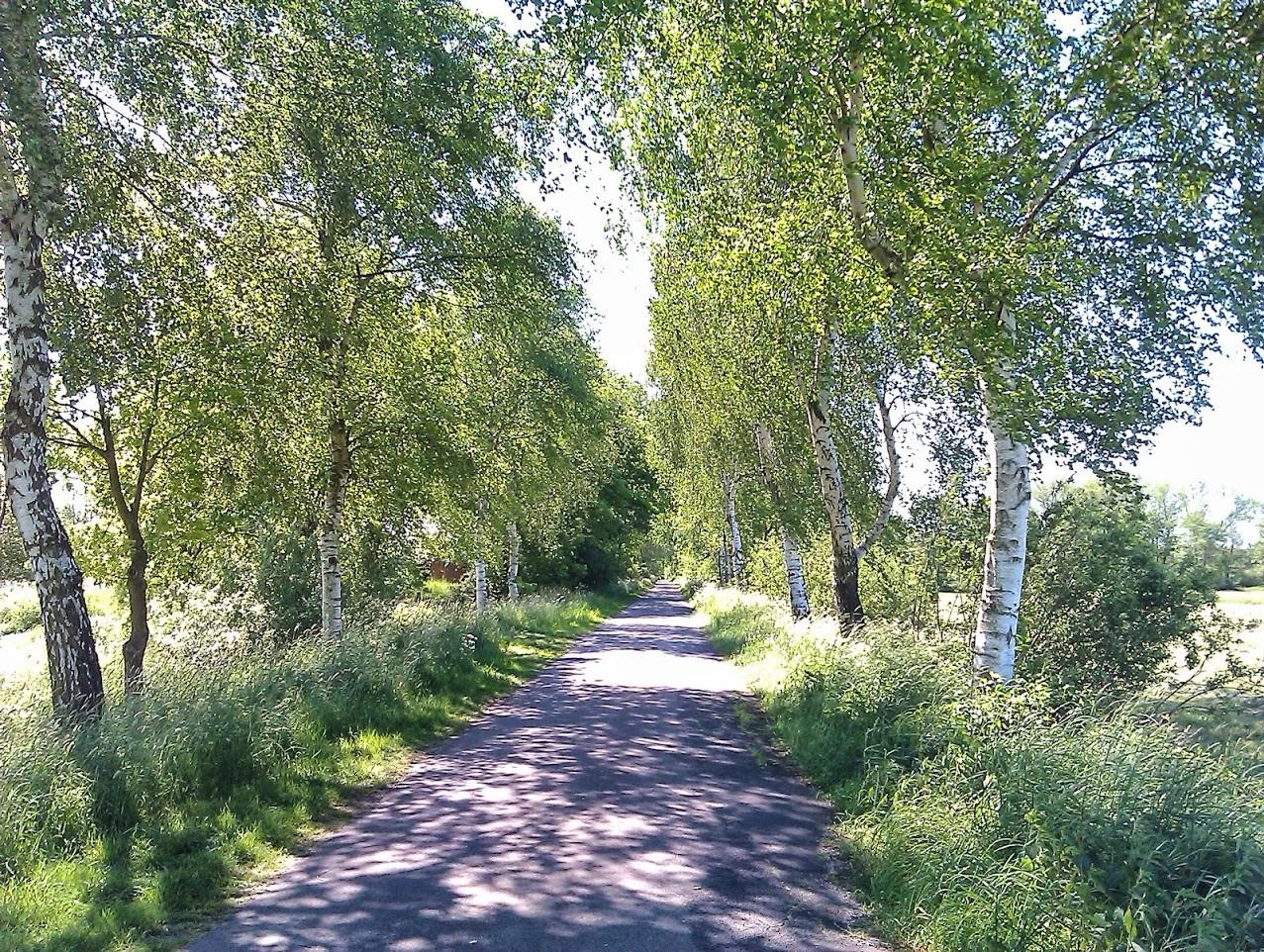 ~ Bild: Birkenweg ~