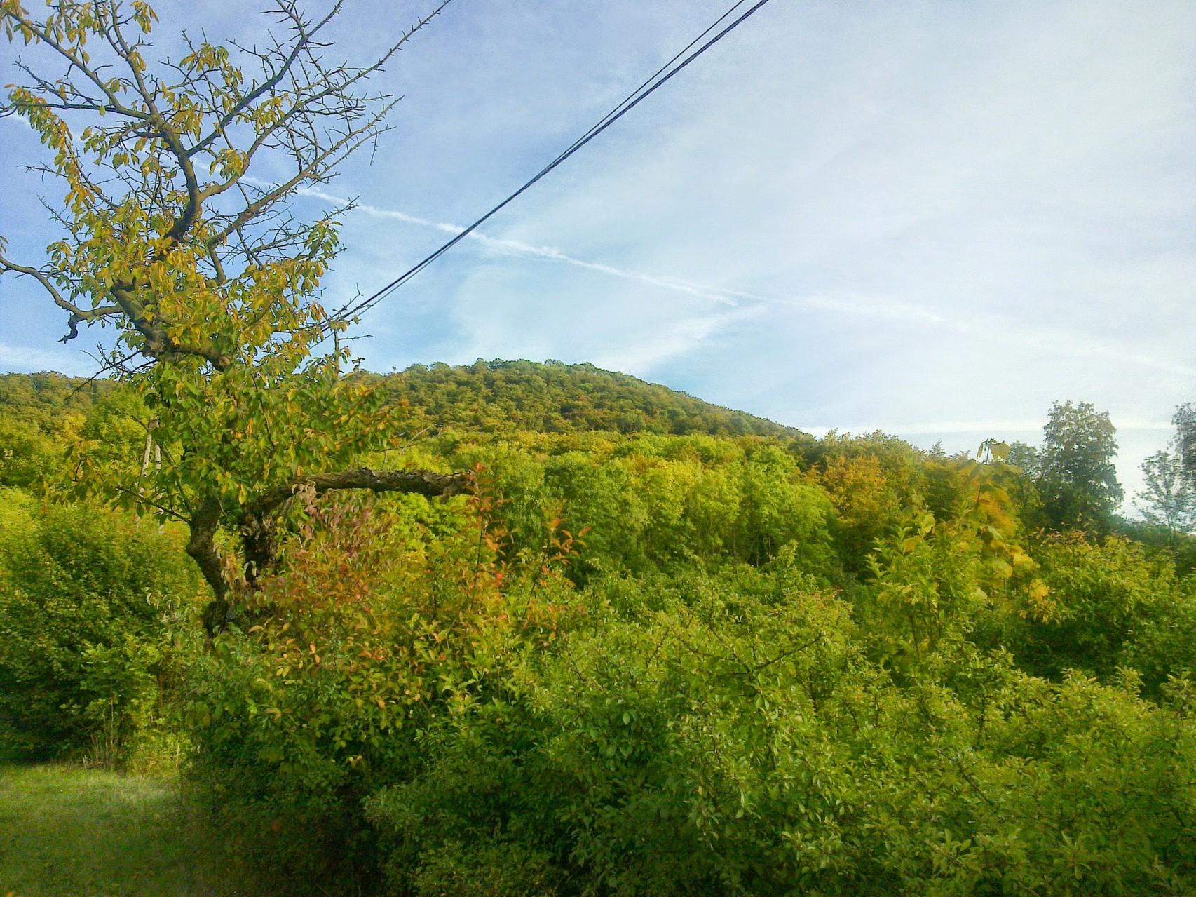 """~ Bild: Blick auf die """"Hohe Tafel"""" (Tafelberg) vom Kirschweg bei Brüggen (Leine)"""