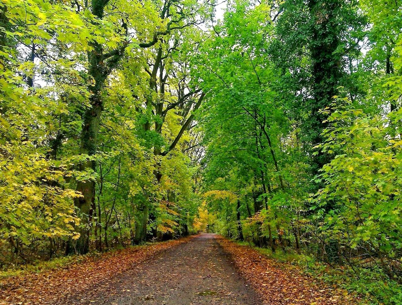 ~ Bild: Herbstwald bei Sittensen ~
