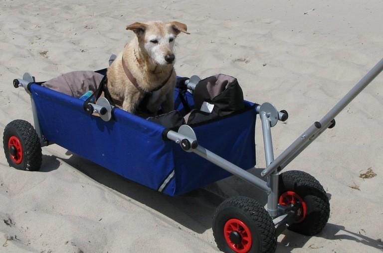 mit Sonderanfertigung - Gurte für Hunde