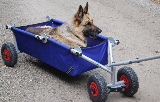 Auto für Hunde - ulfBo