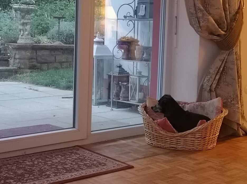 Die spannende, geheimnisvolle Welt der Hunde