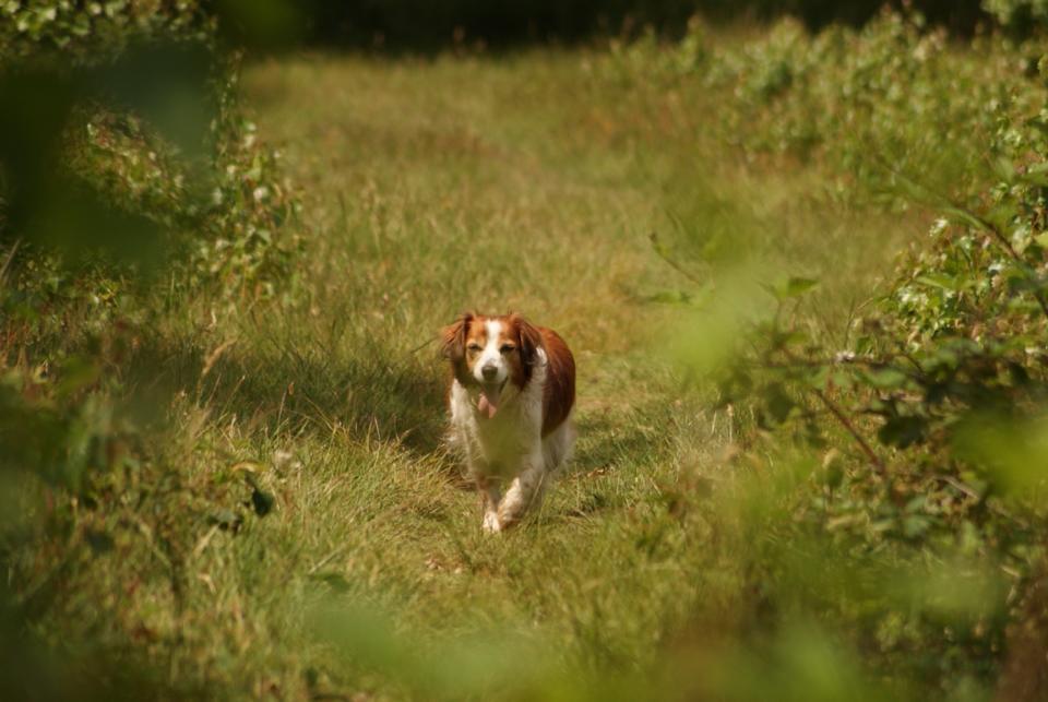 in green fields