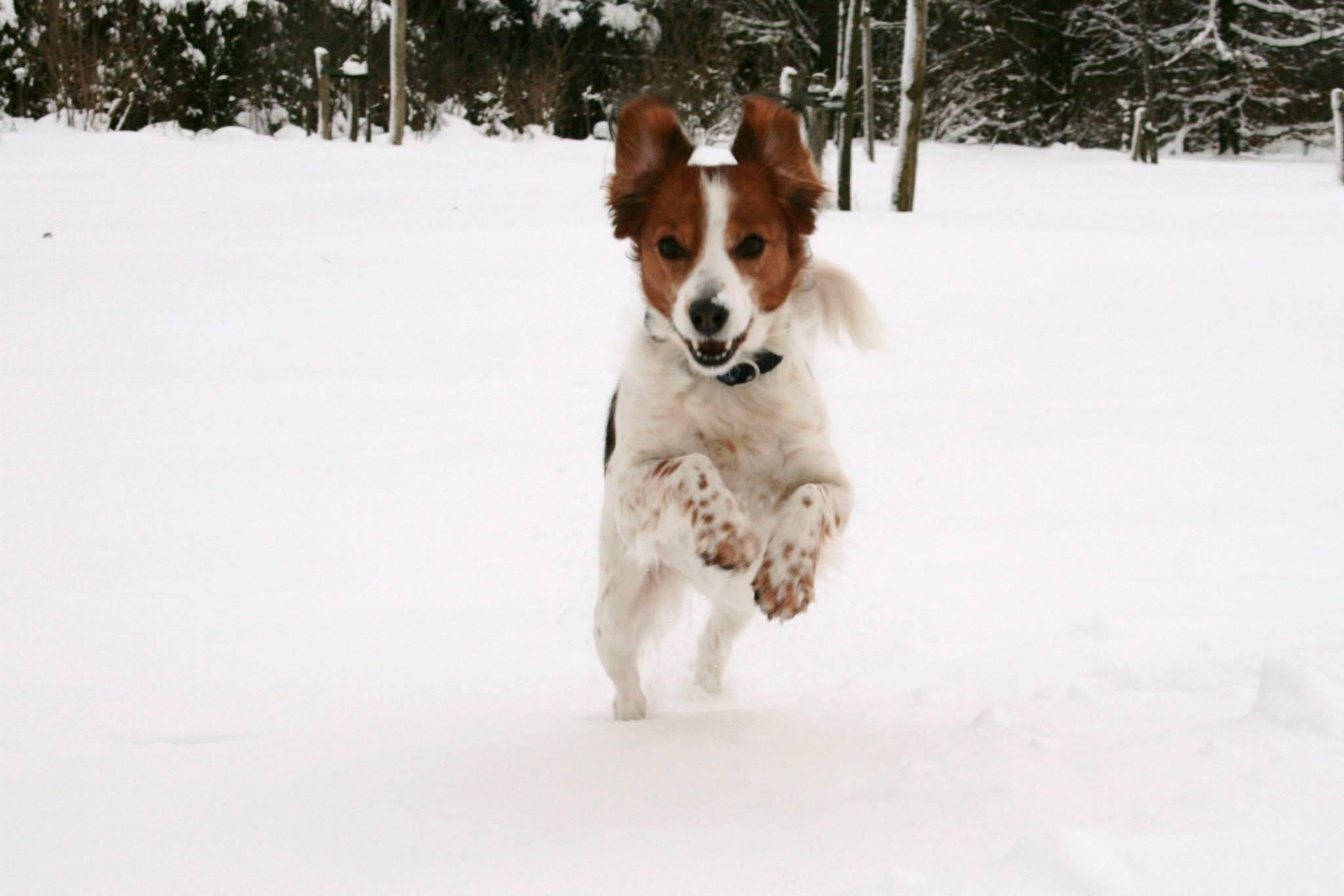 hazensprong door de sneeuw