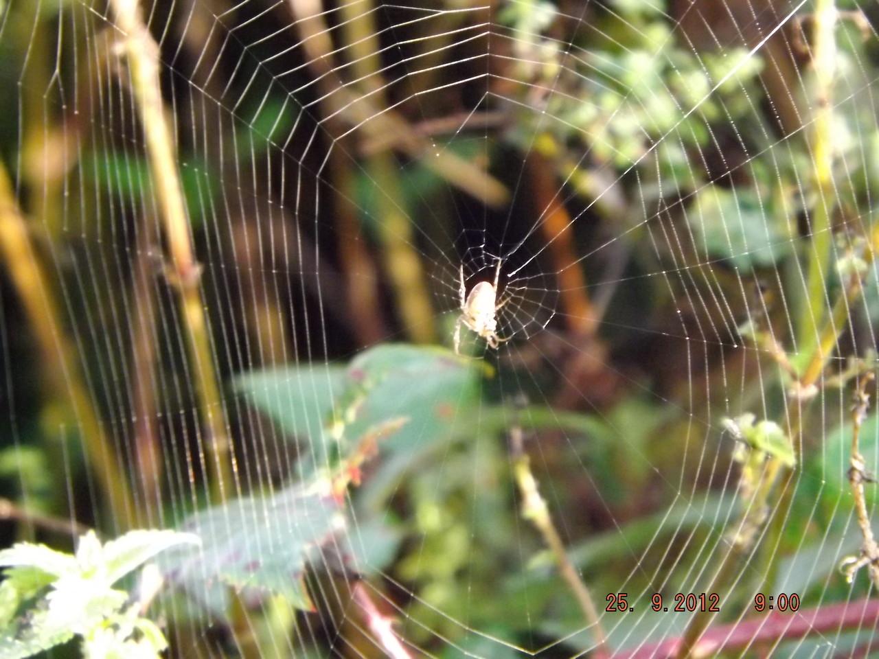 Superbe toile d'araignée