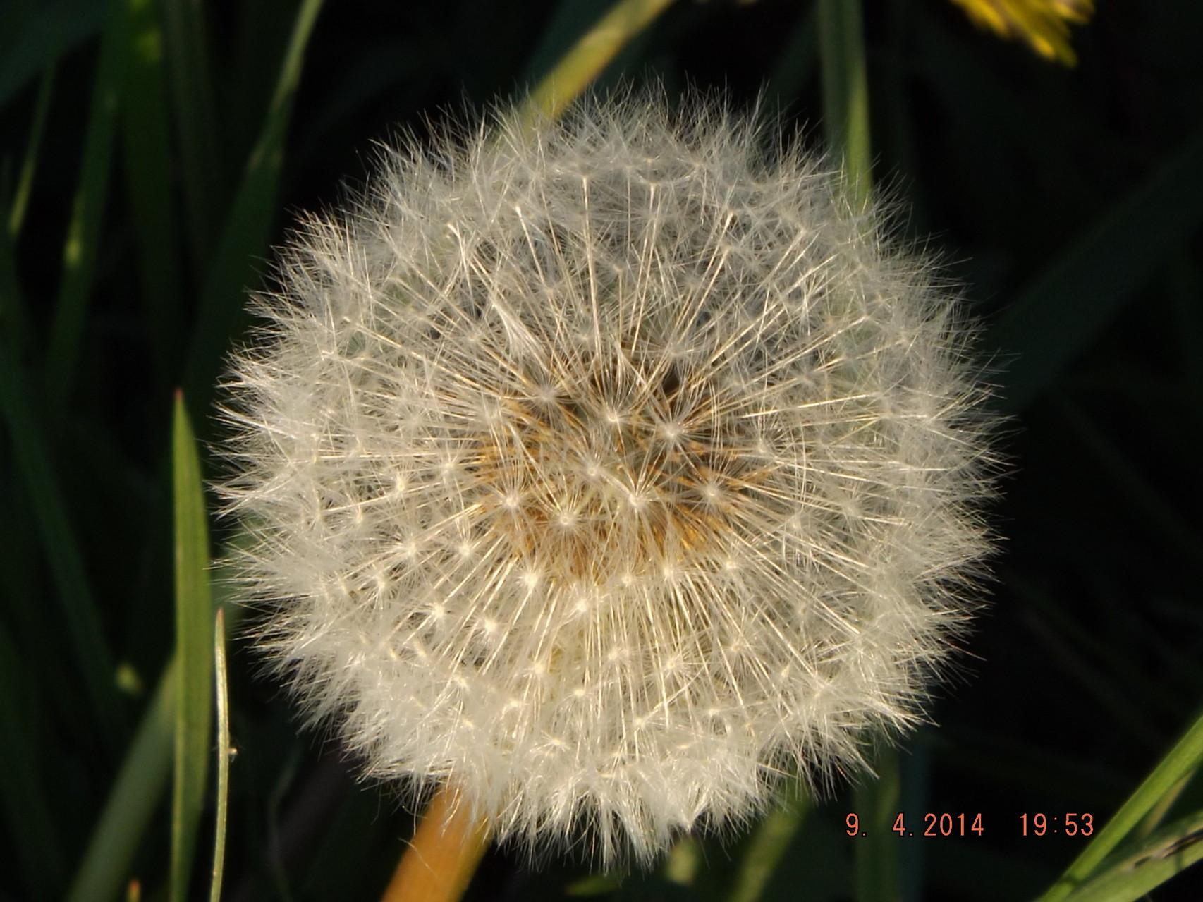La fleur est devenue graines