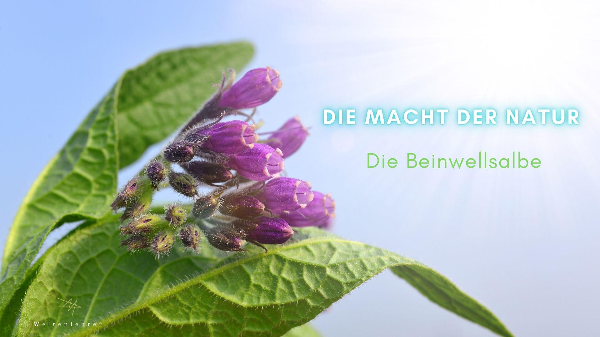 Weltenlehrer-Gesundheitstipp - Die Macht der Natur, die Beinwellsalbe.