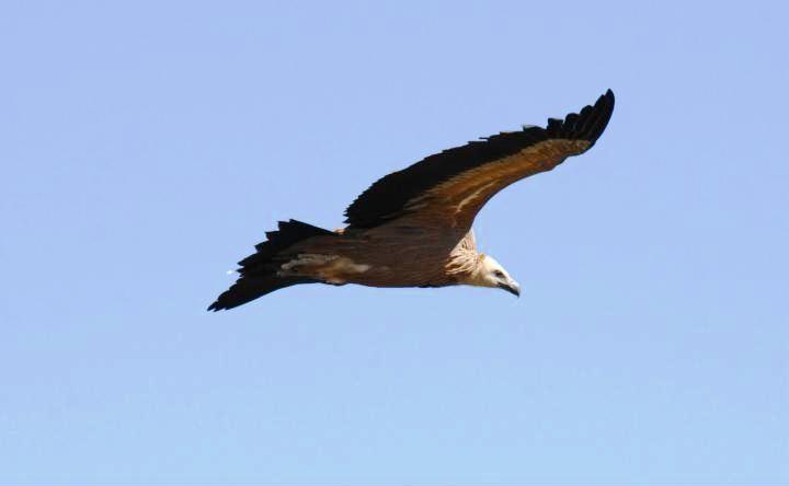 Fauna en la Hoya de Huesca