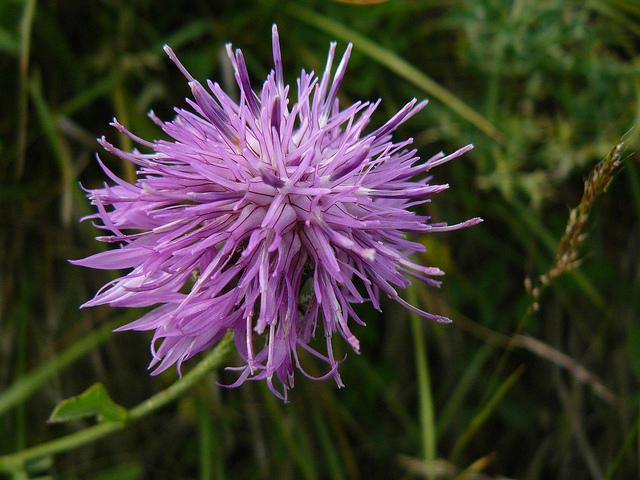 Flora de Lacuniacha