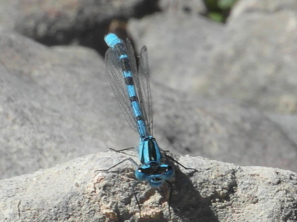 Azul? Que bonita....