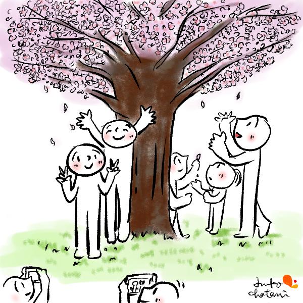 満開の桜の下で写真を撮る人 茶谷順子