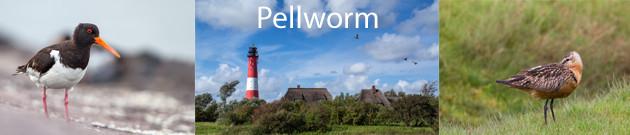 Pellworm 2014