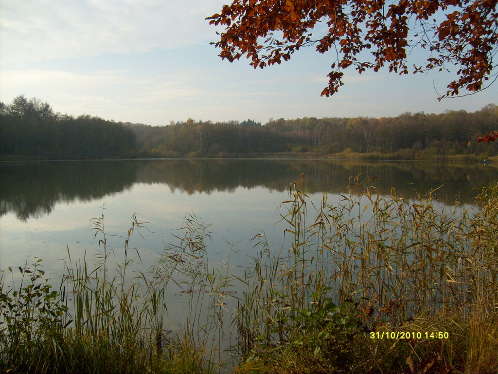 Der  Bogensee