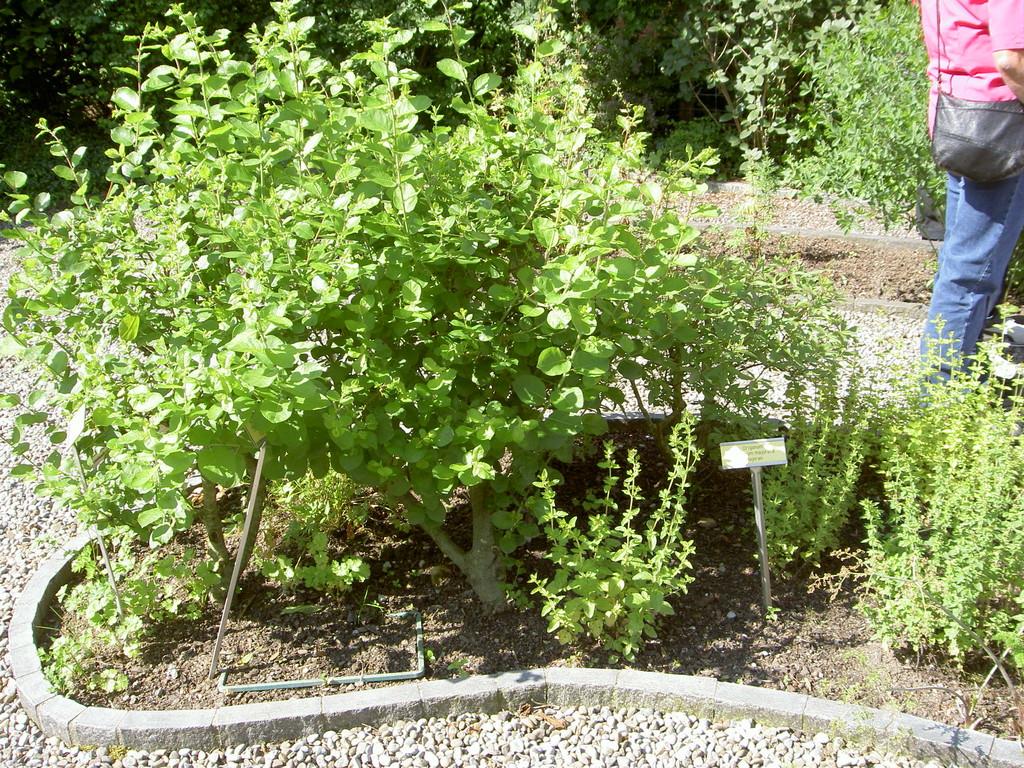 Im Homöopathischen Garten Zug