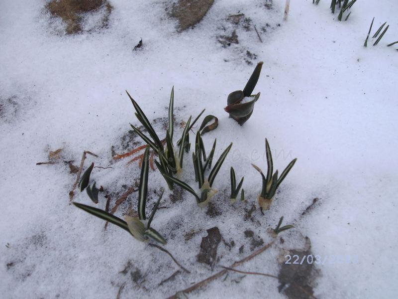 24.03.2013. А вчера еще была весна(((
