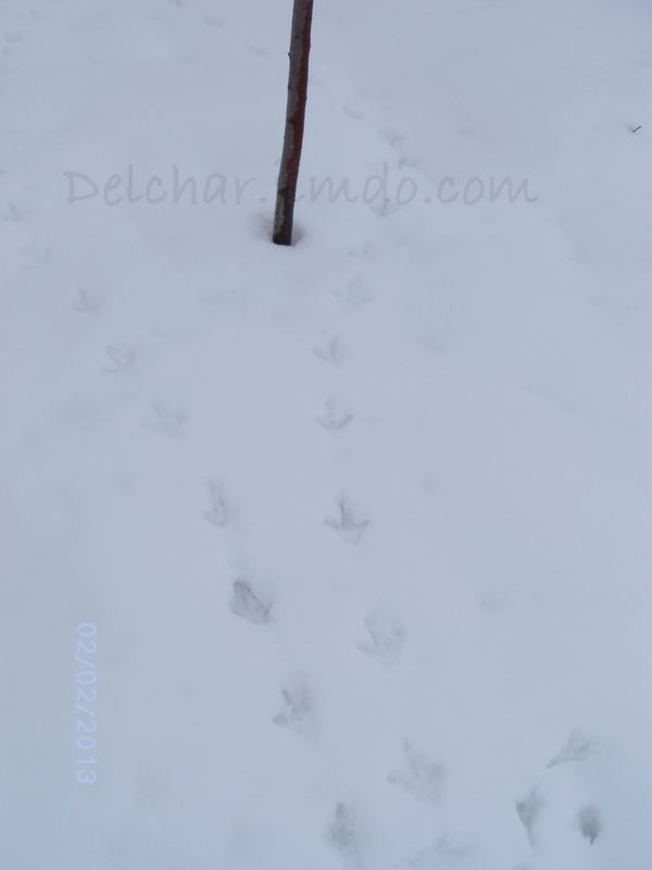 Птицы  и снег)))