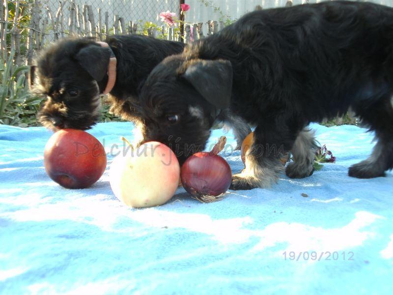 Овощи и фрукты - полезные продукты)) Гарик и Ляля