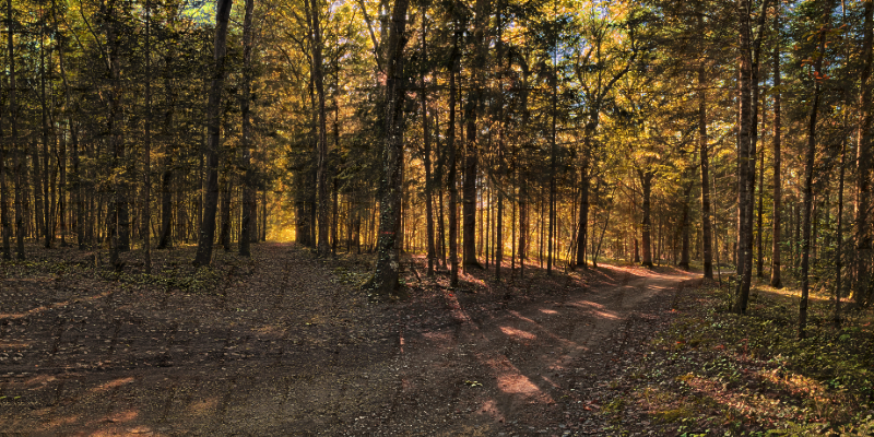 Antonne et Trigonant  forêt de Lanmary