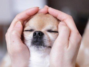 Santé de vos animaux