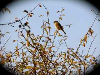 Der Vogel im Gebüsch
