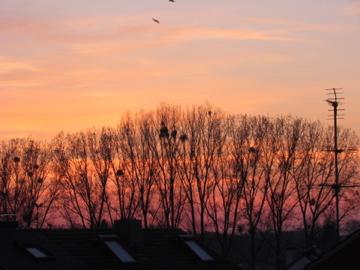 Abendspaziergang bei Sonnenuntergang im Spätherbst an der Niers