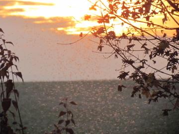 Achtsames Beobachten der tanzenden Mücken im Sommer