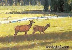Bố cục sai. Hai con hươu cạnh tranh với nhau vì có vị trí, kích thước và tư thế giống nhau.