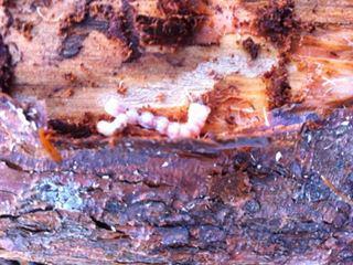 木虫を探せ