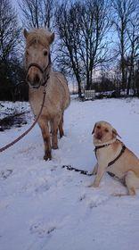 Ljosadis och Jack- båda gula :)