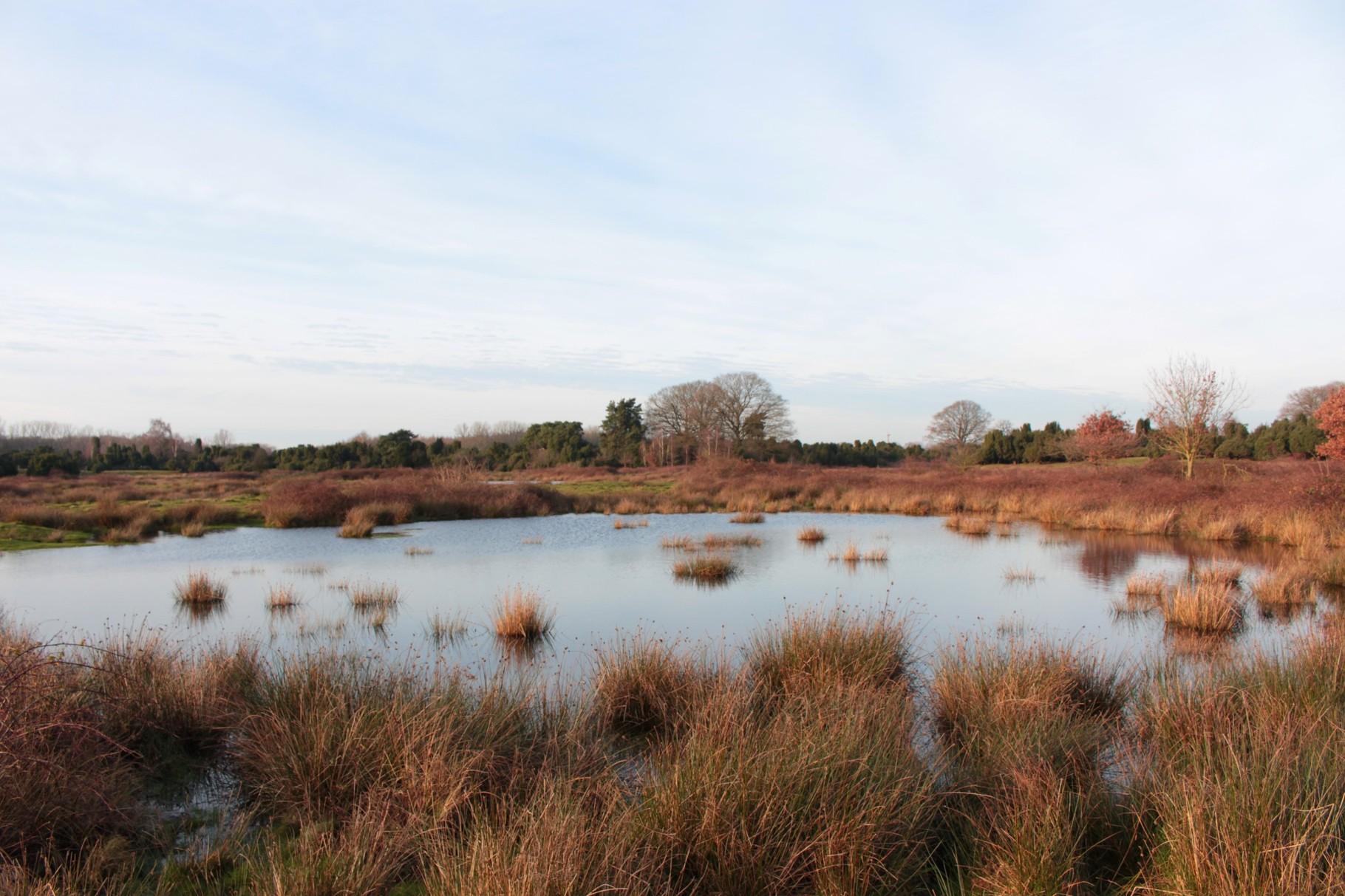 Gewässer sind Lebensraum für Amphibien und Libellen (Foto: C.Marien)