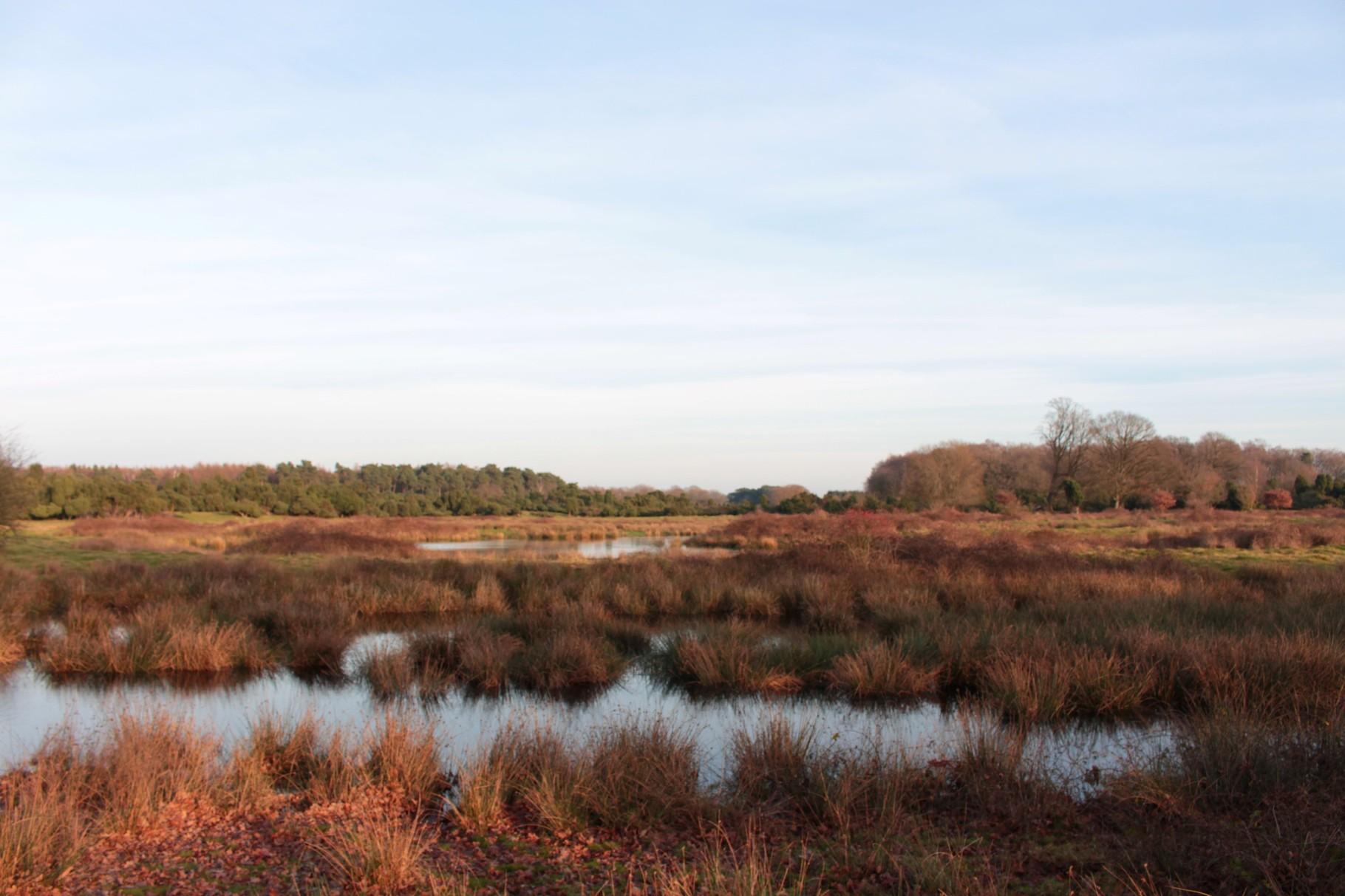 Flutrinnen durchziehen das Schutzgebiet (Foto: C. Marien)