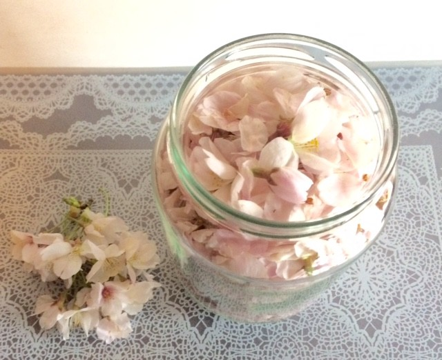 桜の花の香りを抽出します