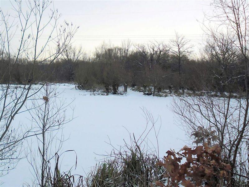 Im Winter sind die Lachen oft zugefroren und schneebedeckt. Aber schon im zeitigen Frühjahr mit den ersten frostfreien Tagen erwachen die ersten Amphibien aus der Winterruhe und suchen wie jedes Jahr die Laichgewässer auf.</p>Foto: René Sievert