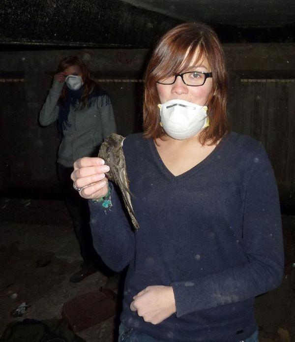 Durch defekte Nistkästen sind teilweise Vögel in die Dachböden gelangt, wo sie den Rückweg in die Freiheit nicht mehr finden konnten. Durch die Wartungsarbeiten des NABU soll es solche Todesfälle in Zukunft seltener geben.