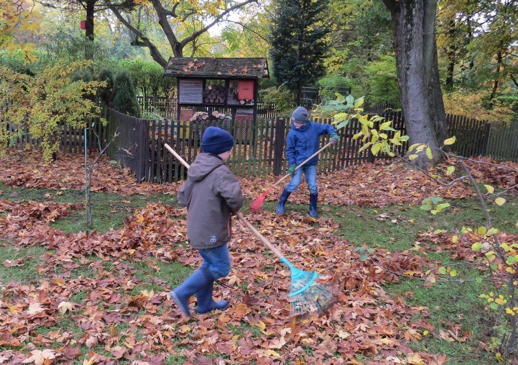 Fleißig haben die Schülerinnen und Schüler für den Laubhaufen Blätter zusammengeharkt.