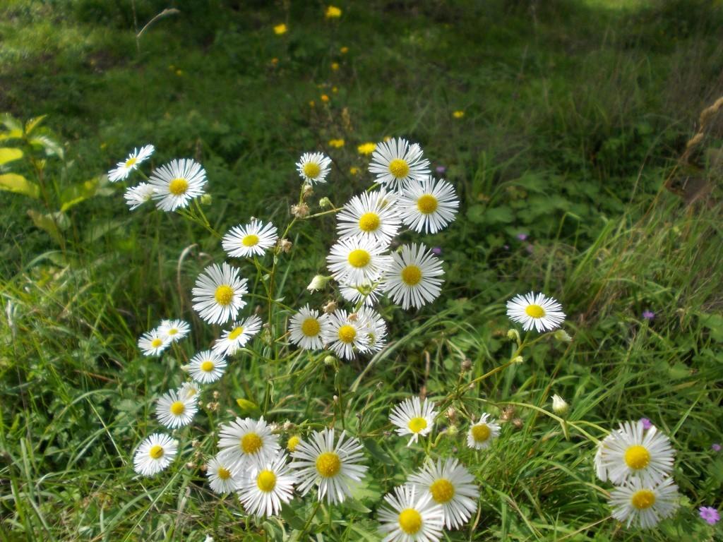 Exkursion zu Flora und Fauna auf der NABU-Wiese.</p>Foto: René Sievert