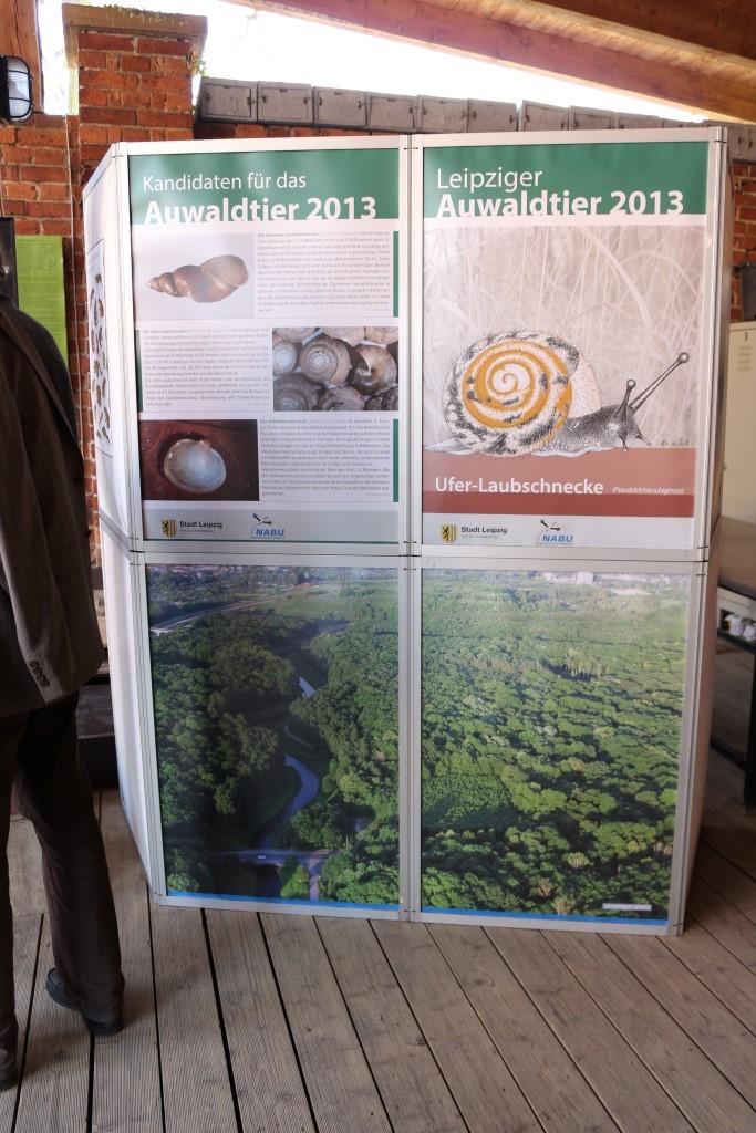 Auwaldtier des Jahres ist die Ufer-Laubschnecke. Foto: Maria Vitzthum