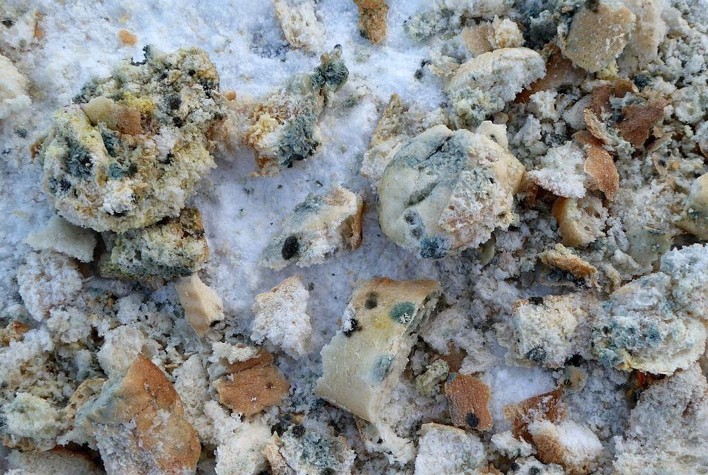 """Volle Plastikbeutel mit verschimmeltem Brot schütten """"Tierfreunde"""" in den Silbersee und auf die Eisfläche. Das ist kein Tierschutz!"""