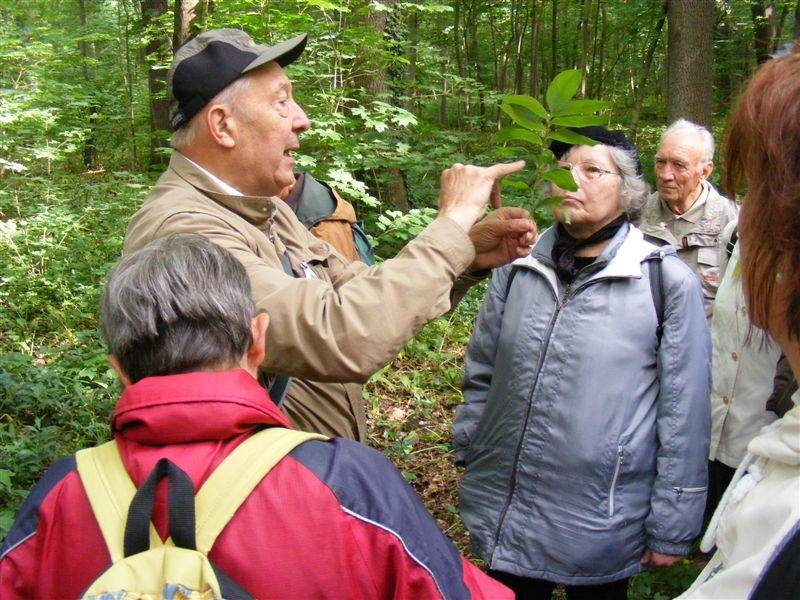 Dr. Gutte stellt bei der Exkursion durch den südlichen Auwald verschiedene Pflanzen vor.<p/>Foto: Matthias Fitzke