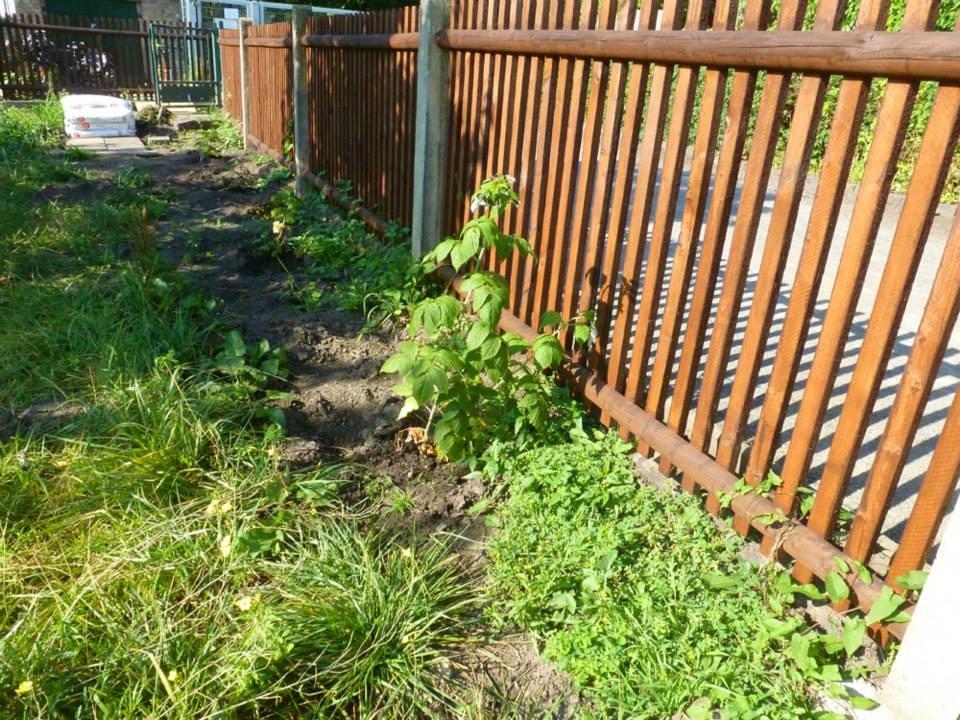 Der Zaun ist nun von beiden Seiten gestrichen und kleine Beerenpflanzen wurden gesteckt.