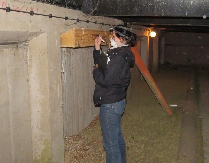 Einige Nistkästen wurden neu beschriftet und in Beobachtungslisten erfasst, so dass kontrolliert werden kann, ob die Mauersegler die Bruthilfen auch annehmen.</p>Foto: Karsten Peterlein