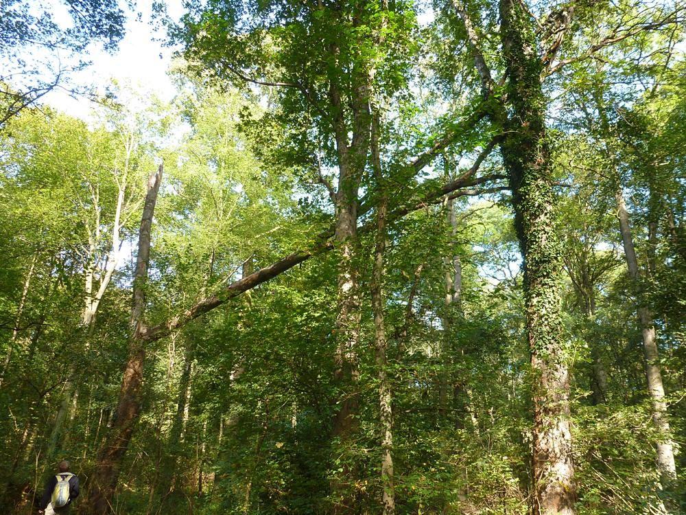 Baumidylle im nördlichen Auwald